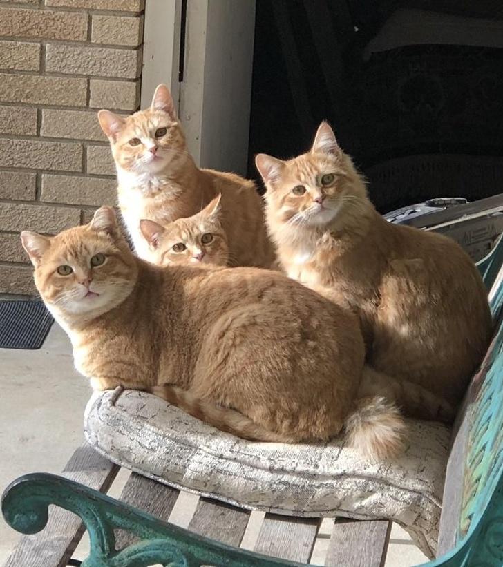 Милые котики - 13