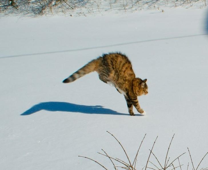 Кошки не любят снег - 13