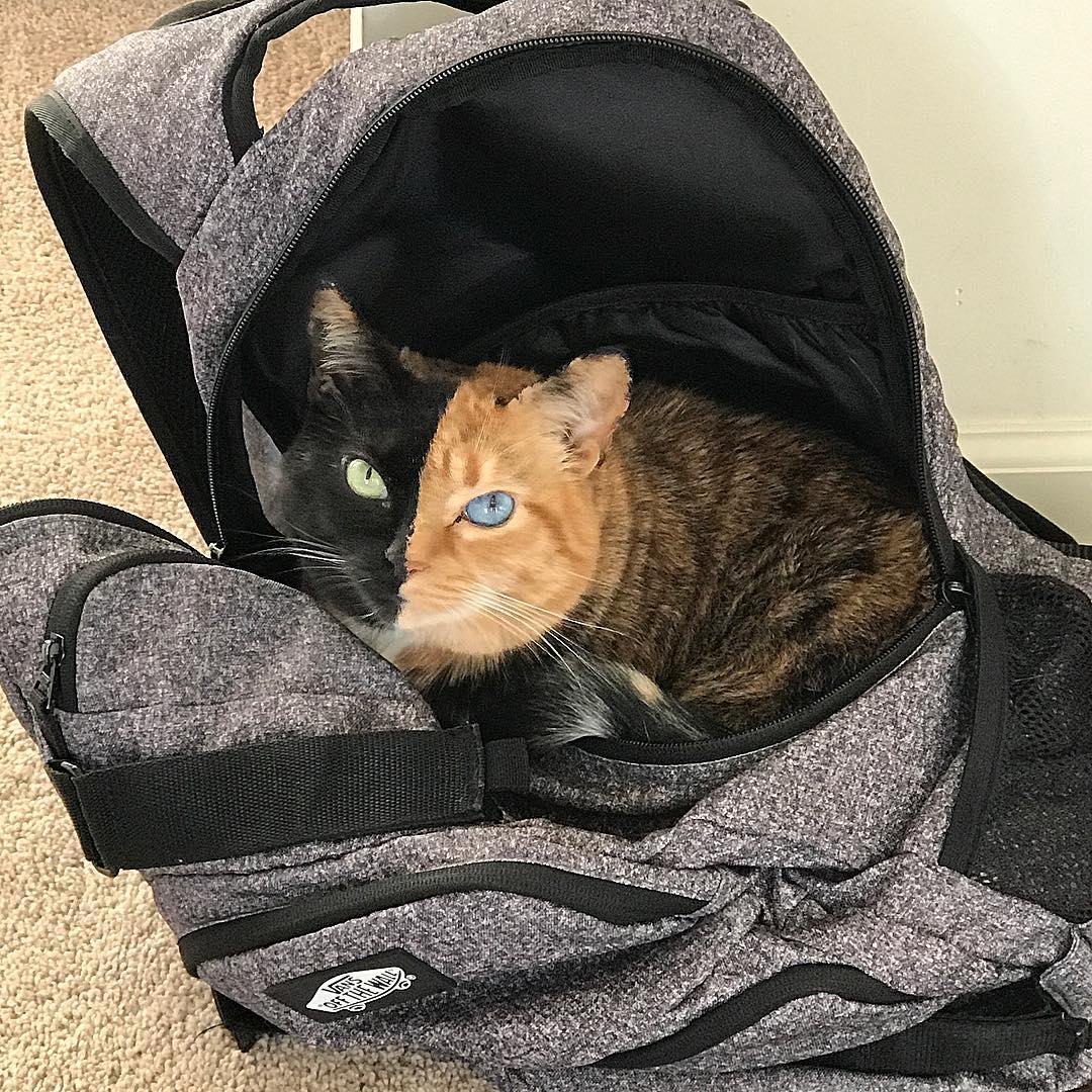 Милые котики - 18