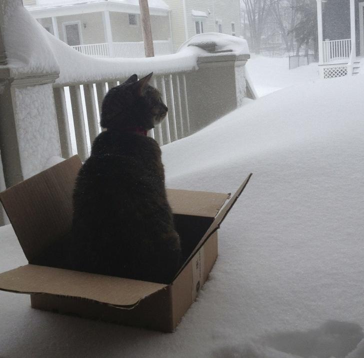 Кошки не любят снег - 19