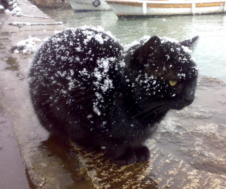 Кошки не любят снег - 20