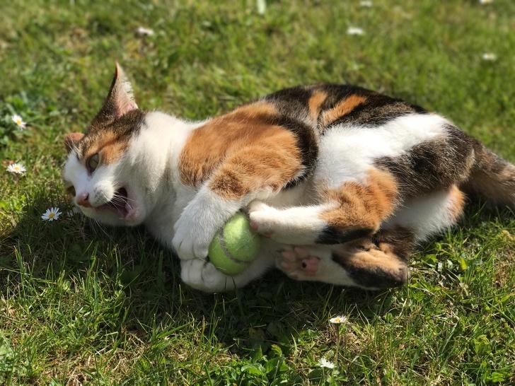 Милые котики - 21
