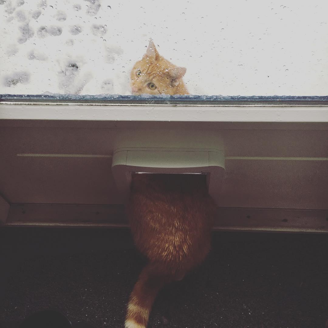 Кошки не любят снег - 22