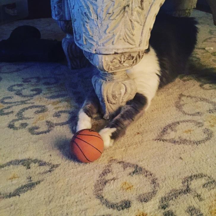 Милые котики - 23