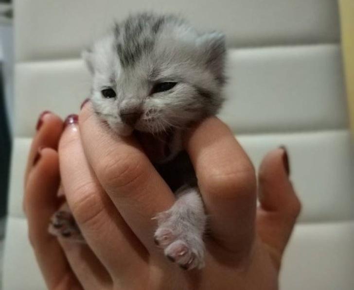 Милые котики - 27