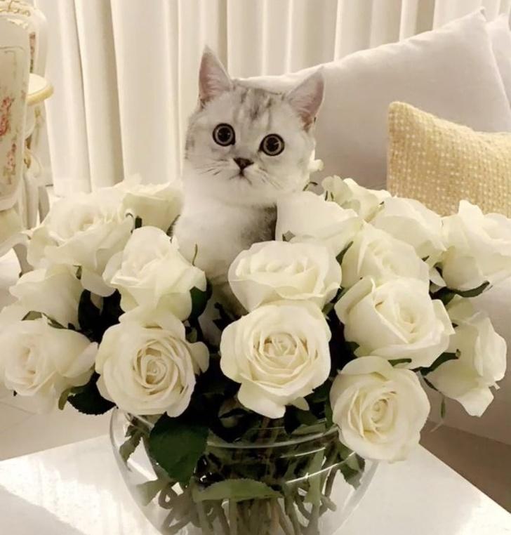 Милые котики - 28