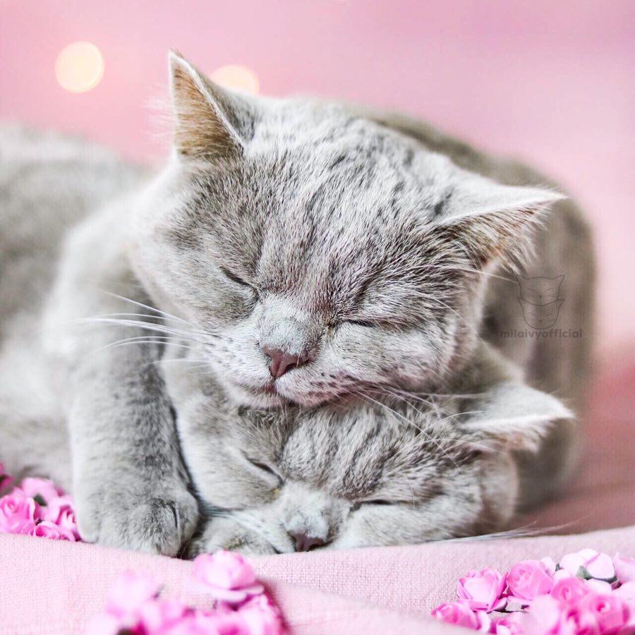 Милые котики - 29