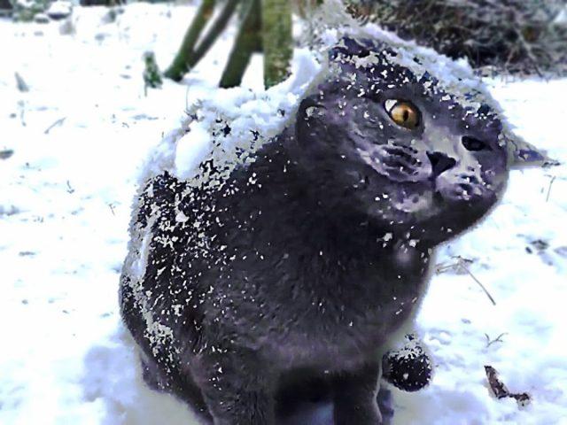 Кошки не любят снег