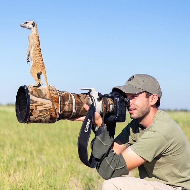 Любопытные животные - 3