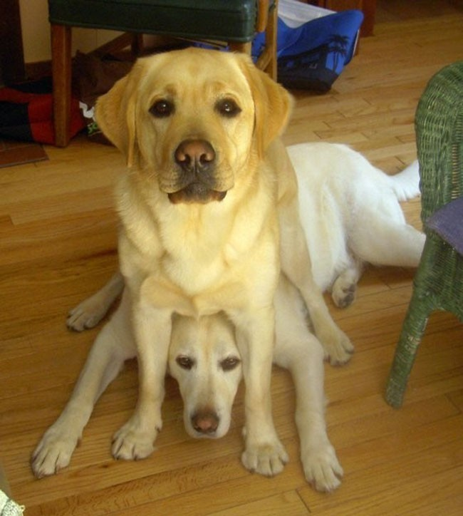 Собаки сидят - 4
