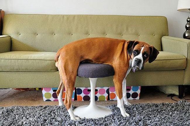Собаки сидят - 5