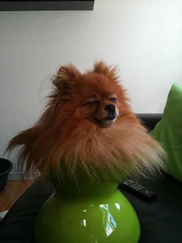 Собаки сидят - 8