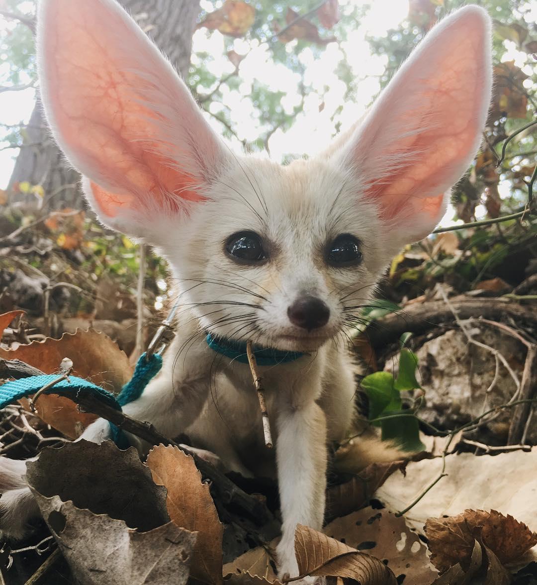 взгляд глаза редкие домашние животные фото есть еще