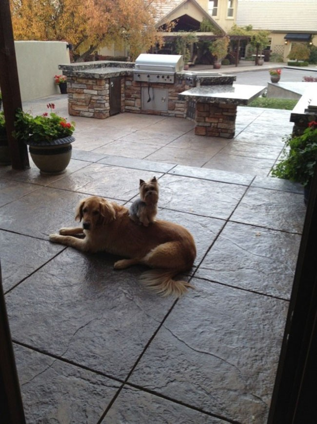 Собаки сидят - 12
