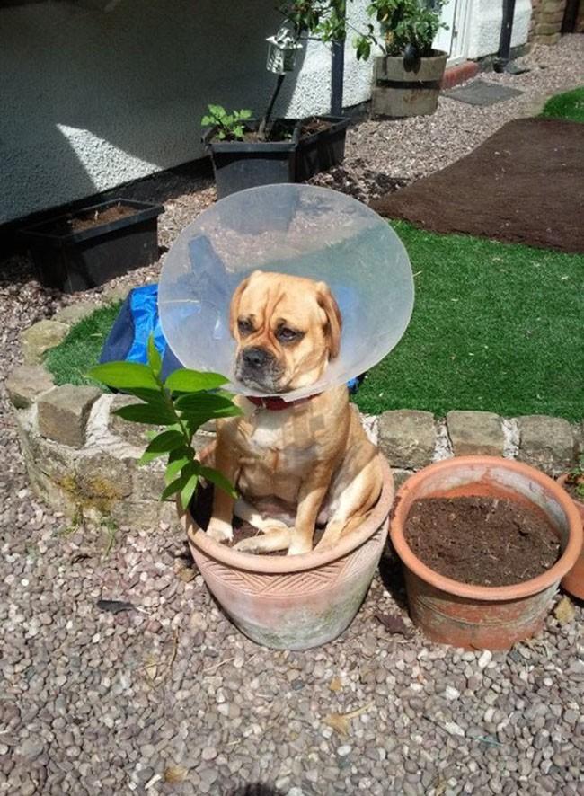 Собаки сидят - 17