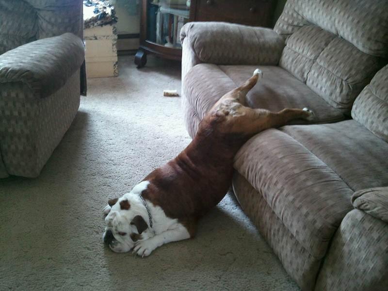 Собаки сидят - 23