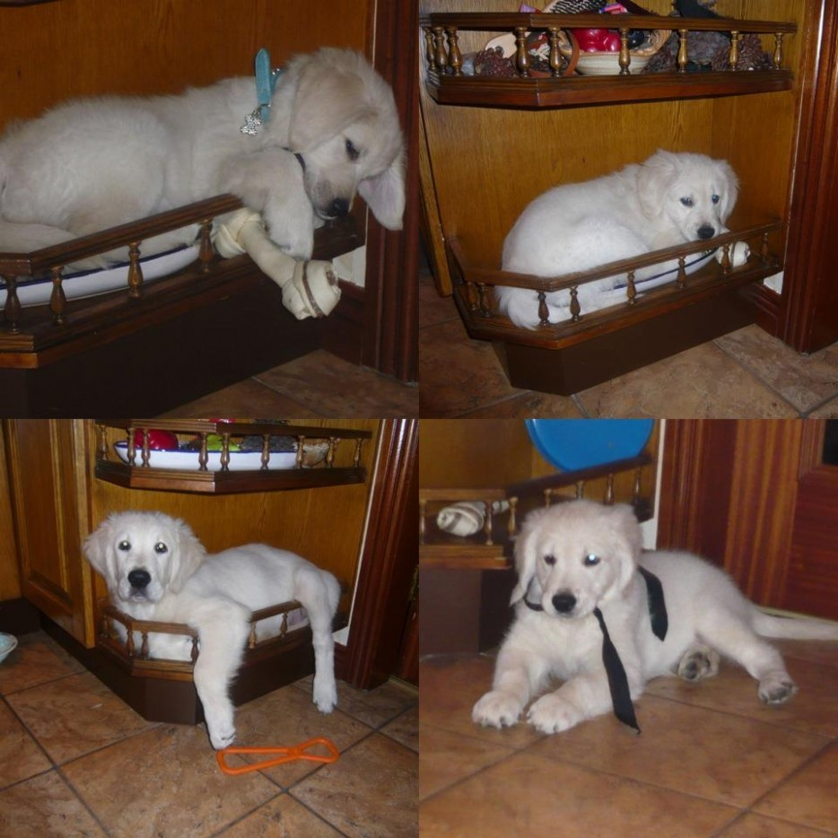 Собаки сидят - 26