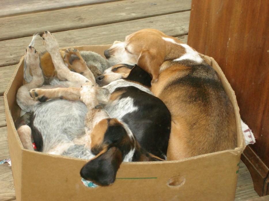 Собаки сидят - 31