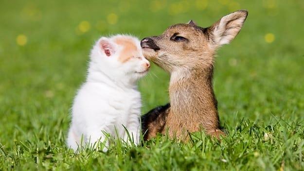 Милые животные - 14