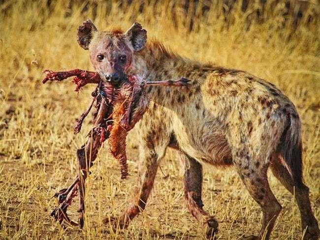 Животные-убийцы - 5