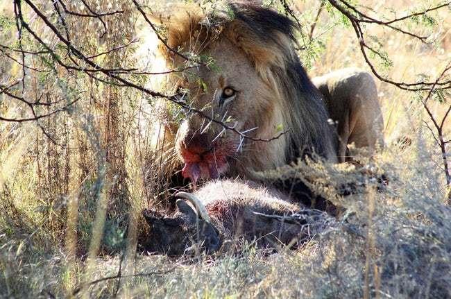 Животные-убийцы - 9